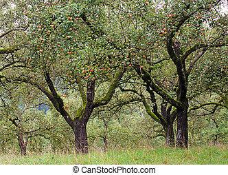 시골, 농원, 나무, 애플