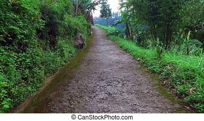 시골, 에서, 자바, 인도네시아