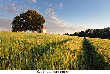 시골, 여름, 슬로바키아 공화국