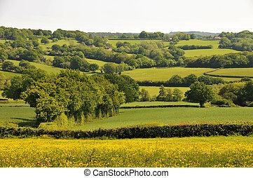 시골, 영국, kentish