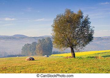 시골, 조경술을 써서 녹화하다, 폴란드