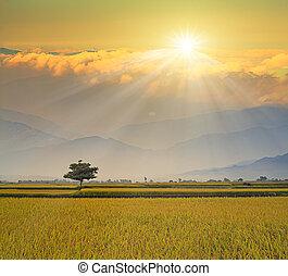 시골, 풍경, 억압되어, 농장, 녹색, n