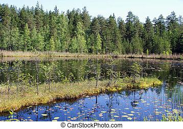 시골, 핀란드, 평온, 호수