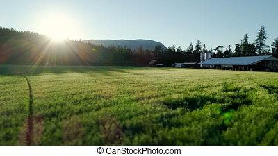 시골, 4k, 녹색 분야