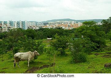 시골, pune, urba, city-blend