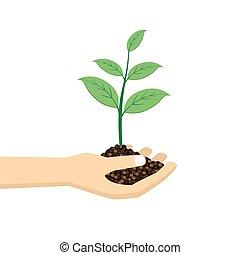 식물, 녹색, 건네라.