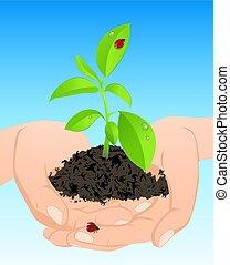 식물, 녹색, 나이 적은 편의, 손