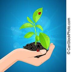 식물, 녹색, 손