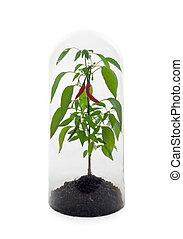 식물, 보호되고 있다