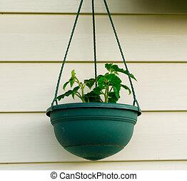 식물, 에서, a, 냄비 따위 하나 가득