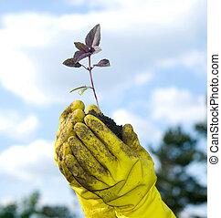 식물, 에서, a, 손