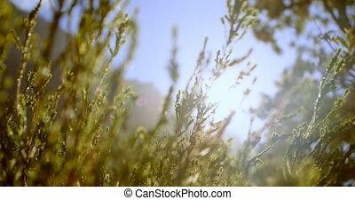 식물, 4k, 시골