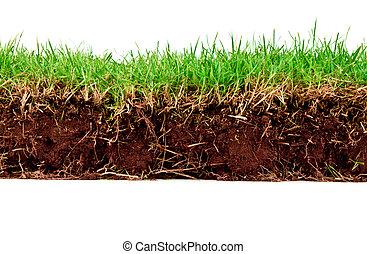 신선한, 봄, 녹색 잔디, 와, 농토, 고립된, 백색 위에서, 배경.