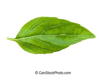 신선한, basil, 잎, 고립된
