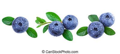 신선한, blueberries, 와, 잎