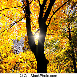 실루엣, 의, 그만큼, 나무, 향하여, 그만큼, 태양