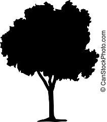 실루엣, 의, 낙엽수