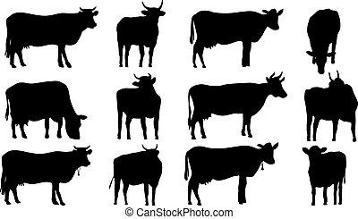 실루엣, 의, 암소, 와..., bulls.