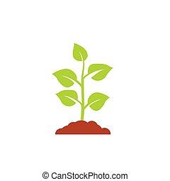 실생 식물, 나무, 벡터, 성장하는, 녹색, 농업, 아이콘