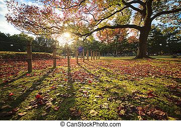 아름다운, 계절, 가을