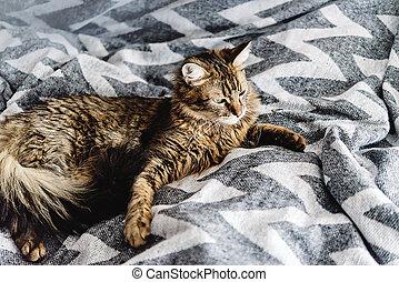 아름다운, 귀여운, 고양이, 있는 것, 통하고 있는, 유행, 침대 곁, 와, 혼자서 젓는 길쭉한 보트, 정서, 보기, 배경에, 의, 방