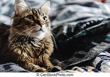 아름다운, 귀여운, 고양이, 있는 것, 통하고 있는, 유행, 침대, 와, 관심을 끌, 표현, 배경에, 의, 방