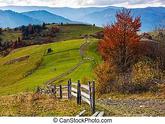 아름다운, 깊다, 가을, 시골, 장면