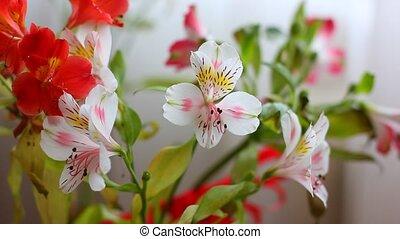 아름다운, 꽃, 꽃