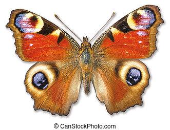 아름다운, 나비, 백색 위에서, 와, a, 클리핑패스