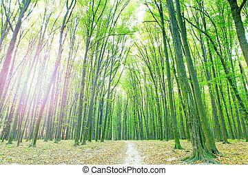 아름다운, 녹색의 숲
