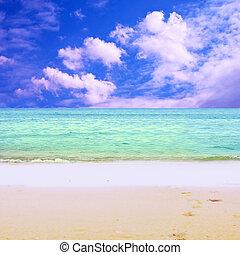아름다운, 명란한, 나이 적은 편의, 열대적인, 비키니, 바닷가, 여자
