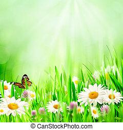 아름다운, 봄, 배경, 와, chamomile, 꽃