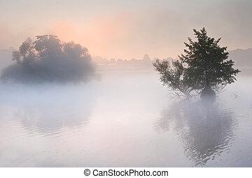 아름다운, 봄 안개가 덮인, 위의, 호수, wih, 가을, 가을, 안개가 지욱한, glowin, 조경술을...