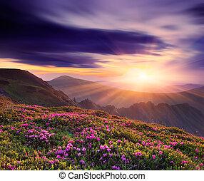 아름다운, 일몰, 에서, 그만큼, 봄, 산의