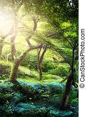 아름다운, 평화로운, landscape;, 오래되었던 나무, 에서, 그만큼, 늙은, 마술, 공원