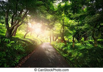 아름다운, 평화로운, landscape;, 좁은 길, 에서, 그만큼, 늙은, 그린 파크