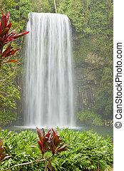 아름다운, 폭포, 에서, 열대적인, 호주