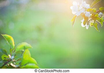 아름다운, 햇빛, 꽃, 애플