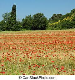 아름다운, tuscan, 은 수비를 맡는다