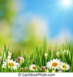 아름다움, 데이지, 꽃, 통하고 있는, 그만큼, 여름, 목초지, 떼어내다, 제자리표, 배경