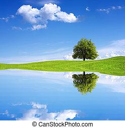 아름다움, 에서, 자연