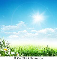 아름다움, 여름, 떼어내다, 환경, 배경, 와, 데이지, 꽃