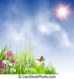 아름다움, 여름, meadow., 떼어내다, 제자리표, 배경