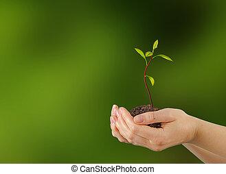 아보카도, 어린 나무, 에서, 손, 가령...와 같은, a, 선물, 의, 농업