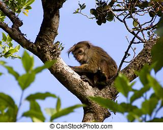 아시아 사람, 원숭이, 통하고 있는, 그만큼, 나무