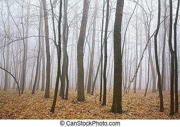아침, 안개, 가을 숲