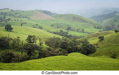 안개가 지욱한, 아침, 에서, 그만큼, 코스타리카, 시골