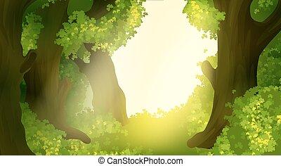 안개가 짙은 숲, 조경술을 써서 녹화하다, 아침