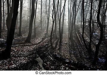 안개, 숲