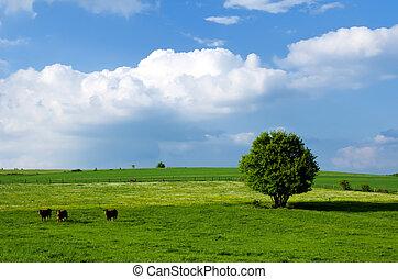 암소, 목초
